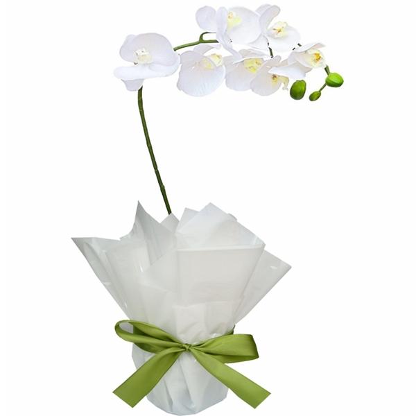 Orquídea delicada