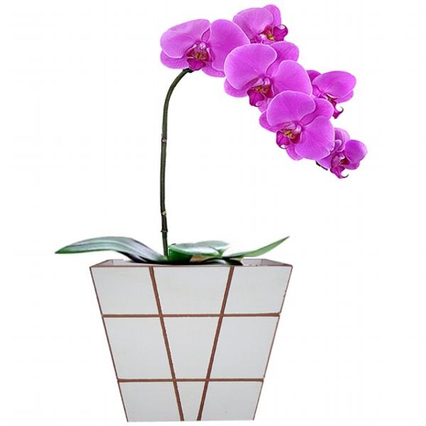 Orquídea Presente Lilás