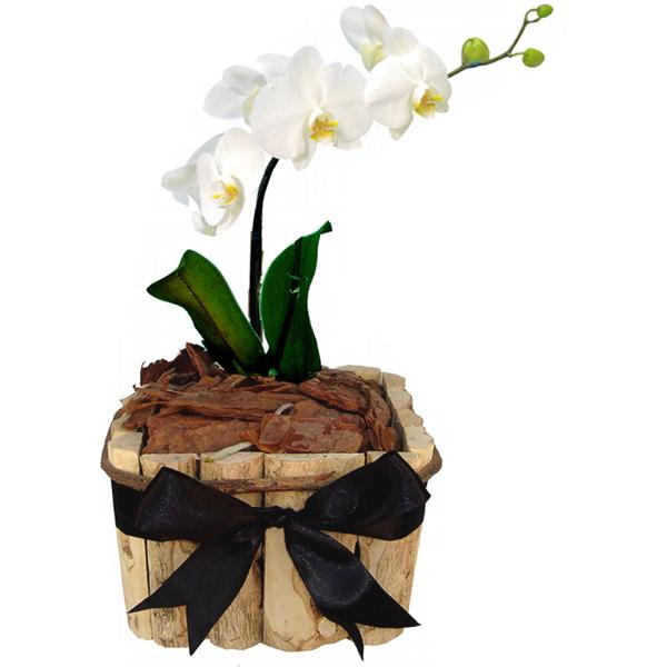 Orquídea Luxo