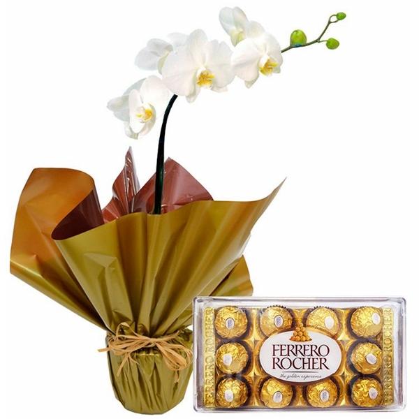 Orquídea Phalaenopsis Branca e Chocolates