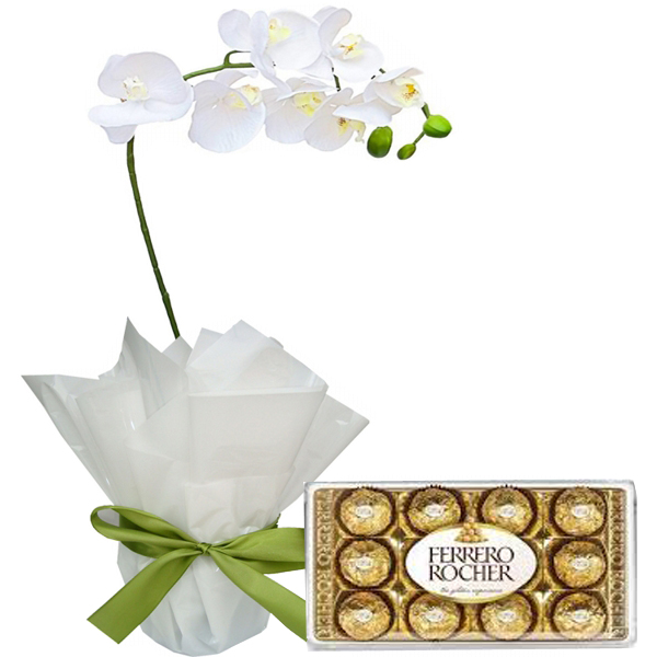 Orqu�dea Phalaenopsis Branca e Chocolates