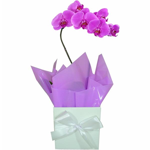 Orquídea  Lilás Decorada