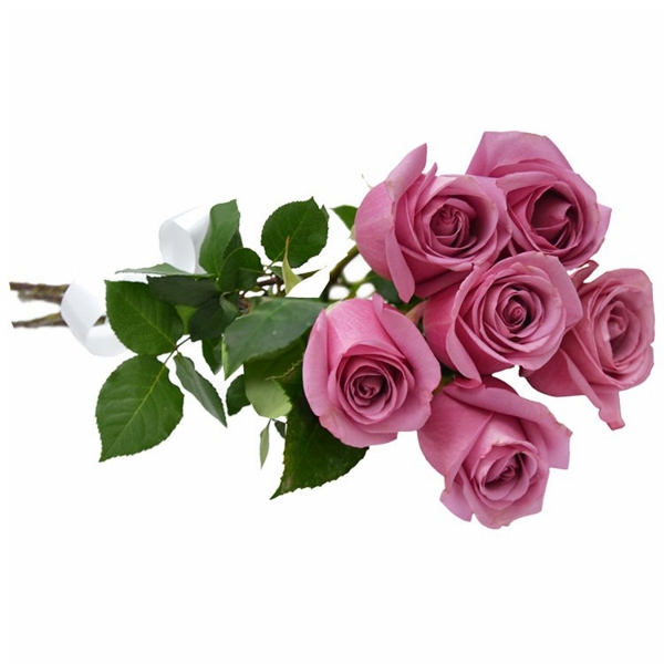 Buquê com 6 Rosas Lilás