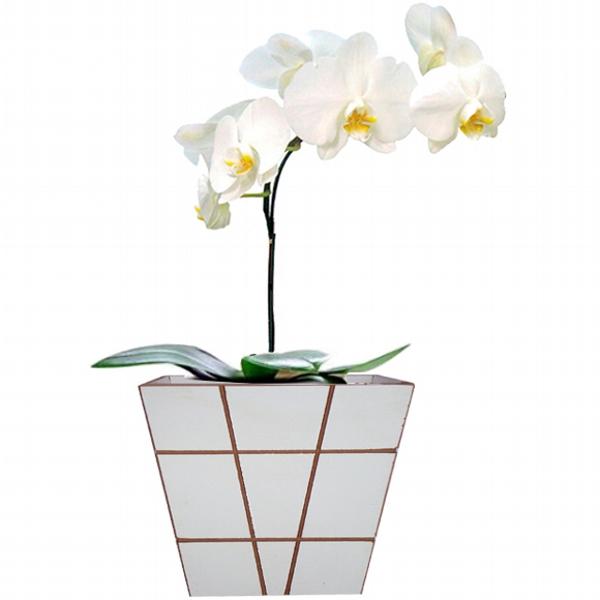 Orquídea Presente Branca