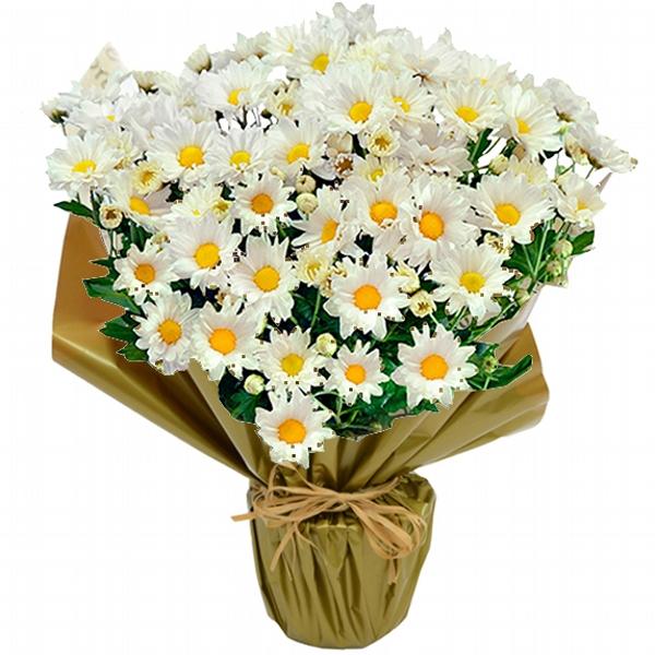 Aroma de Flores Frescas