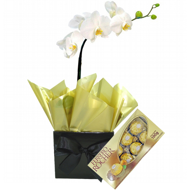 Orquídea Esplendor