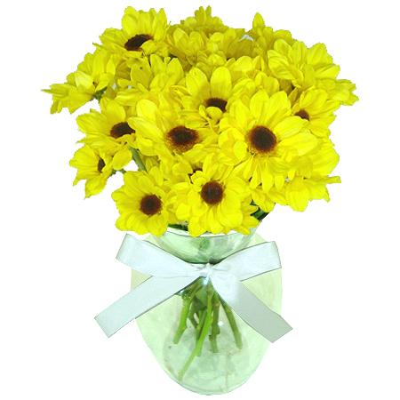 Margaridas Amarelas no Vaso